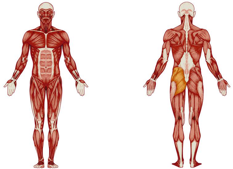 Gesäßmuskel Übungen