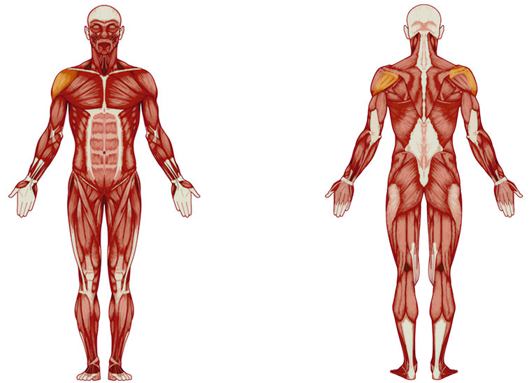 Schulter Übungen