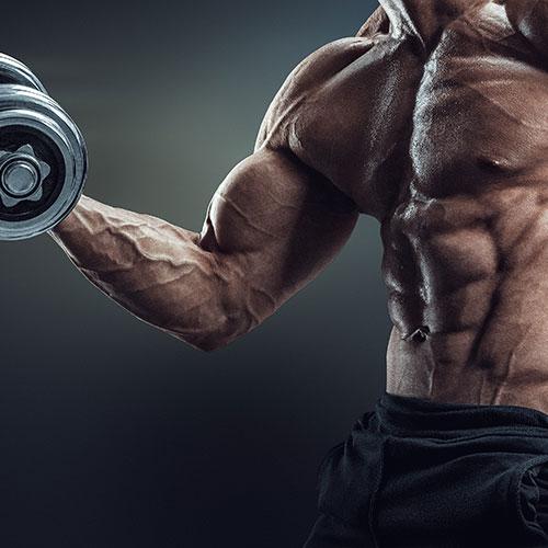 Muskelaufbau Bundle für Männer